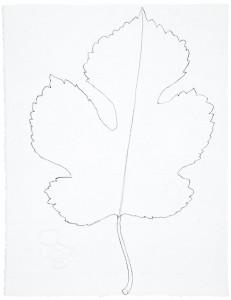 Arborescences 14