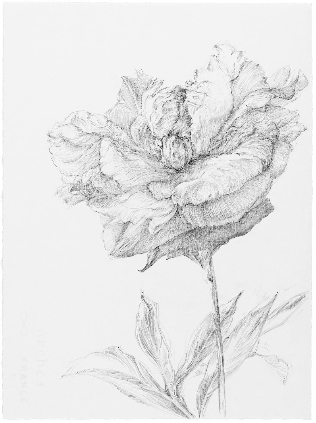 Fleurs 6