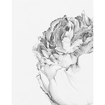 vignette-flores