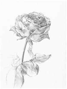 Fleurs 12
